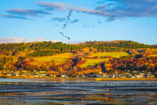 Autumn Landscape View Of La Baie City With Birds On Saguenay River At Dusk
