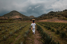 Farmer Carries His Daughter On His Shoulders Among The Crops Of Agave Mezcaleros, They Walk Towards The Horizon