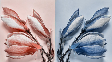 Panel Szklany Kwiaty magnolia flowers in trendy shades of the year. color trends. magnolia coral and blue