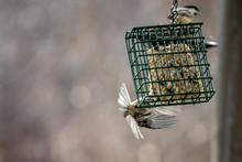 Birds At A Backyard Garden Birdfeeder With Seeds In The Winter