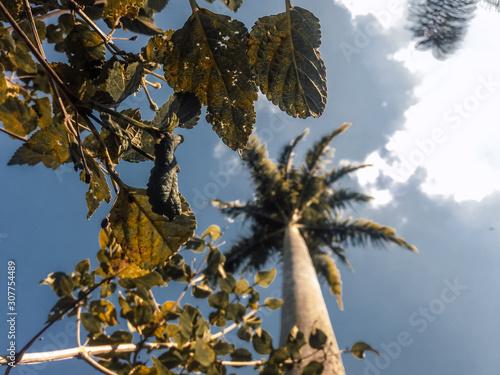Fototapeta palmeira vita de cima