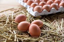 卵 たまご