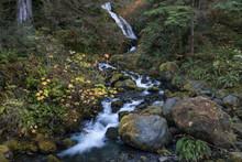 Bunch Falls In Olympic National Park, Washington