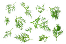 Fresh Green Dill Isolated On White Background. Top View