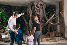 Family In The Museum. A Family Stands In Front Of A Mammoth Skeleton In The Museum Of Paleontology.