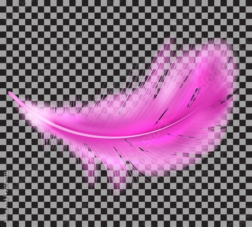 Color pink fluffy feather vector realistic isolated on transparent background Wallpaper Mural