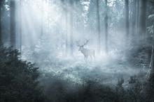 Hirsch Im Nebeligen Wald