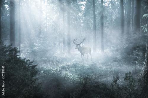 jelen-w-mglistym-lesie