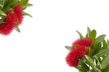 Pohutukawa - New Zealand Christmas Tree Background