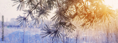 Obraz winter forest with frost - fototapety do salonu