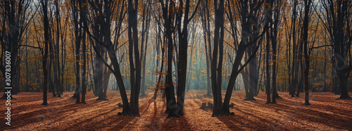 morning autumn forest with sunrise light beams Wallpaper Mural