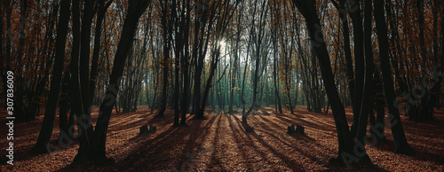 Fotografía morning autumn forest with sunrise light beams