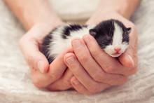 Very Little Striped Kitten In ...