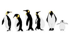 Simple White Black Penguin Character.Vector Illustration Character Doodle Cartoon