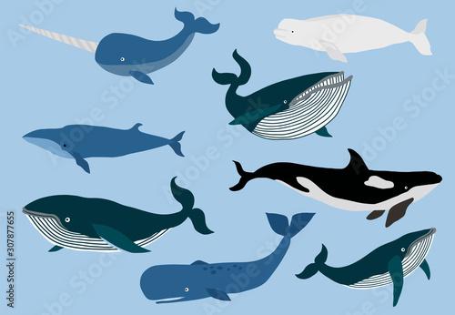 Fotografie, Tablou Simple whale character