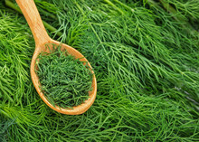 Dill Weed. Fresh Dill Greens. ...