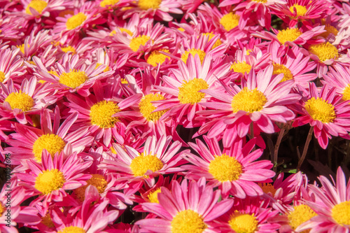 Photo background of flowers