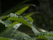 Costa Rica Jungle Leaves
