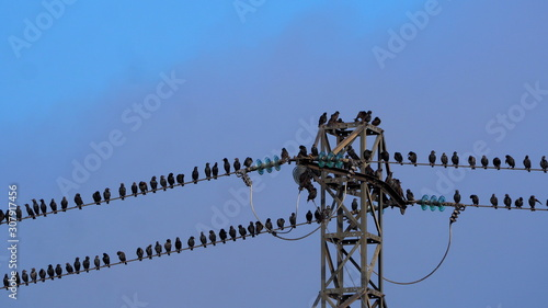 aves pequeñas de color negro posadas en una torre eléctrica, Juneda, Lérida, Esp Wallpaper Mural