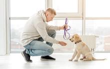 Man Near Retriever Puppy