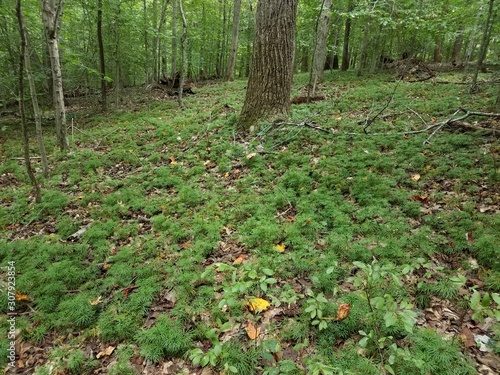 green plant on ground with brown fallen leaves