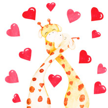 Two Hand-drawn Watercolor Kissing Giraffes With Hearts. Illustration For Valentines Day Isolated On White Background.