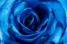 Blue Color Rose Background