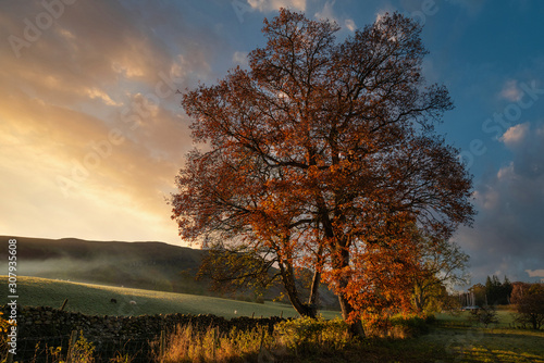 Foto auf Leinwand Schokobraun Stunning vibrant Autumn Fall landscape of countryside in Lake District with lovely golden light on trees and hills