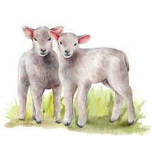 Watercolor Spring Card With Meadow And Lambs. Hand Painted Green Grass And A Pair Of Sheep Isolated On White Background. Animal Illustration For Design, Print, Fabric Or Background.