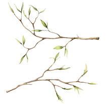 Watercolor Spring Set With Branches For Easter. Hand Painted Tree Thin Branches And Buds Isolated On White Background. Floral Illustration For Design, Print, Fabric Or Background. Botanical Set.