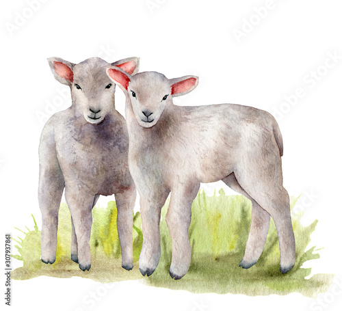 Canvastavla Watercolor spring card with meadow and lambs