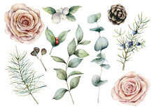 Watercolor Floral And Coniferous Set. Hand Painted Flowers, Pink Roses, Pine Cone And Eucalyptus Isolated On White Background. Botanical Creativity Illustration For Design, Print, Fabric, Background.
