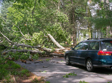 Car Blocked By Large Oak Tree Fallen Across Road
