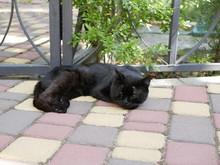A Black Furry Cat Sleeps On A ...