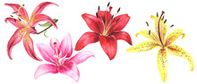 Elegant Lilies, Red Yellow Ora...