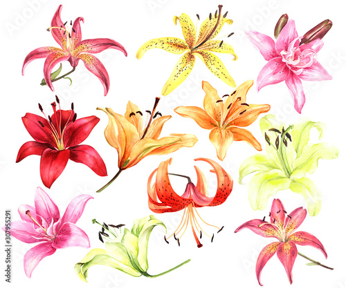 Elegant lilies, red yellow orange pink lily flowers on an isolated white background, watercolor flower, stock illustration, big collection, set Fototapet