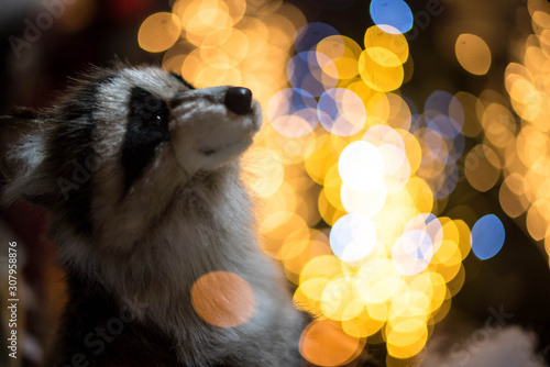 Raccoon sits in front of the Christmas tree and garlands Canvas Print