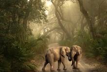 Beautiful Elephant In The Jungle 2