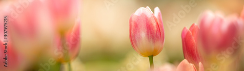 Closeup nature view of beautiful flower on blurred background in garden with copy space for text using as summer background natural flower plants landscape, ecology, fresh cover page concept Wallpaper Mural