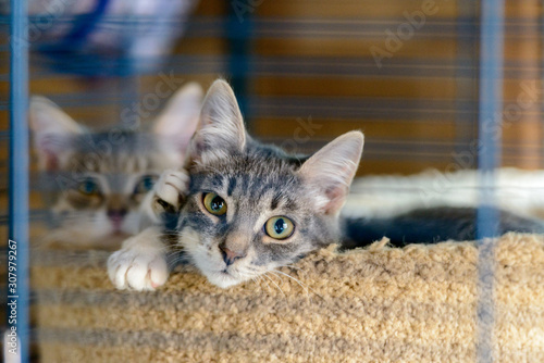 Two cats in a cage in a cat shelter Canvas Print