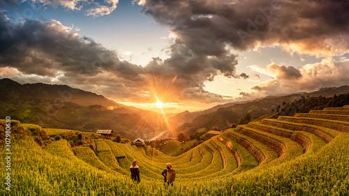 Leinwand Poster  Green Rice fields on terraced in Muchangchai, Vietnam Rice fields prepare the harvest at Northwest Vietnam