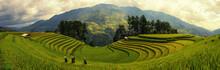 Green Rice Fields On Terraced In Muchangchai, Vietnam Rice Fields Prepare The Harvest At Northwest Vietnam.Vietnam Landscapes.