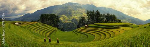 Green Rice fields on terraced in Muchangchai, Vietnam Rice fields prepare the harvest at Northwest Vietnam Fototapete