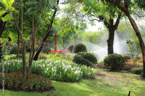 Obraz garden with water springer in the morning - fototapety do salonu