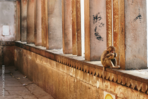 Photo Funny Monkey baby sitting and eating in city Varanasi, India