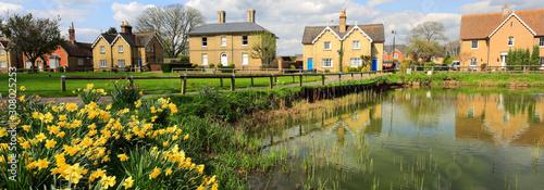 Fototapeta Spring daffodils, Ramsey village pond, Cambridgeshire, England