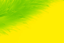 Beautiful Abstract Colorful Yellow And Light Green Feathers On White Background And Soft White Yellow Feather Texture On White Pattern, Lemon Color Background