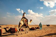 Desert Cruising On Camel Besid...