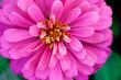 Leinwandbild Motiv closeup beautiful pink flower in the garden, flower background