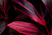 Abstract Colorful Texture, Nat...